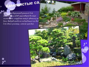 Каменистые сады Поскольку вариантов решений для каменистых садов существует в