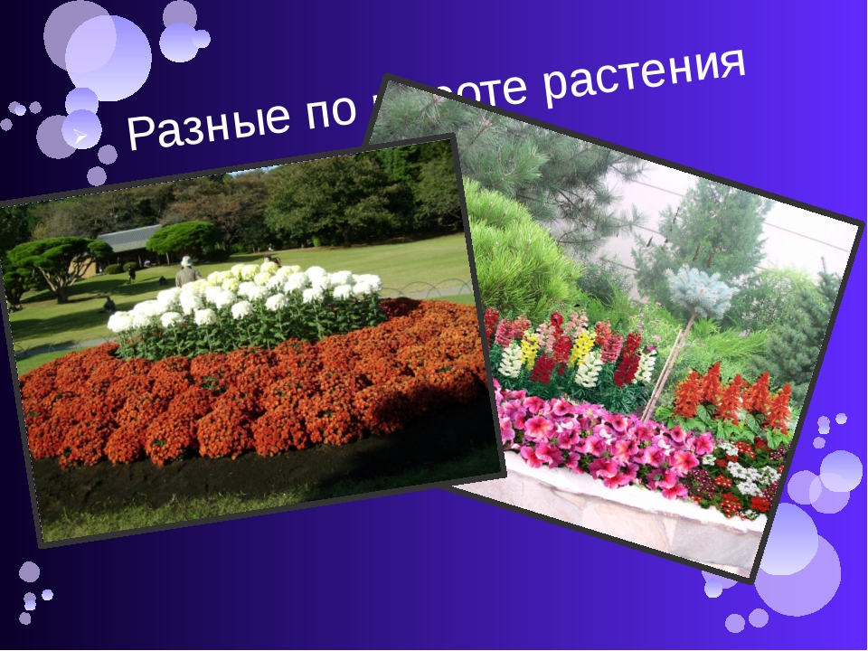 Разные по высоте растения