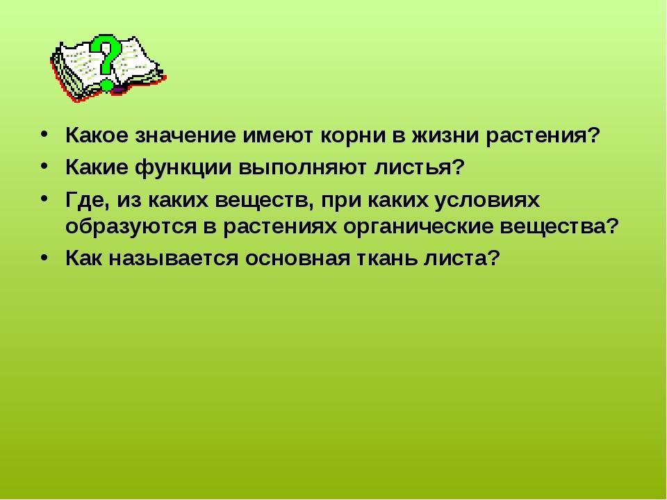 Какое значение имеют корни в жизни растения? Какие функции выполняют листья?...