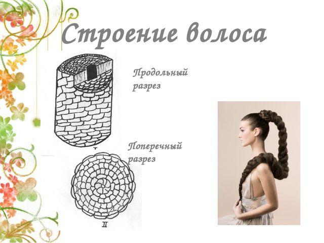 Строение волоса Продольный разрез Поперечный разрез