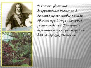 В Россию цветочно-декоративные растения в больших количествах начали ввозить