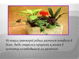 Из таких оранжерей редкие растения попадали в дома. Люди старались приучить к