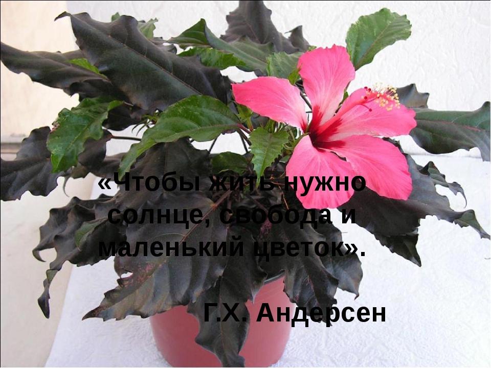 «Чтобы жить нужно солнце, свобода и маленький цветок». Г.Х. Андерсен