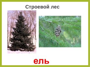 Строевой лес