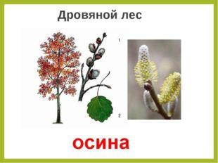 Дровяной лес
