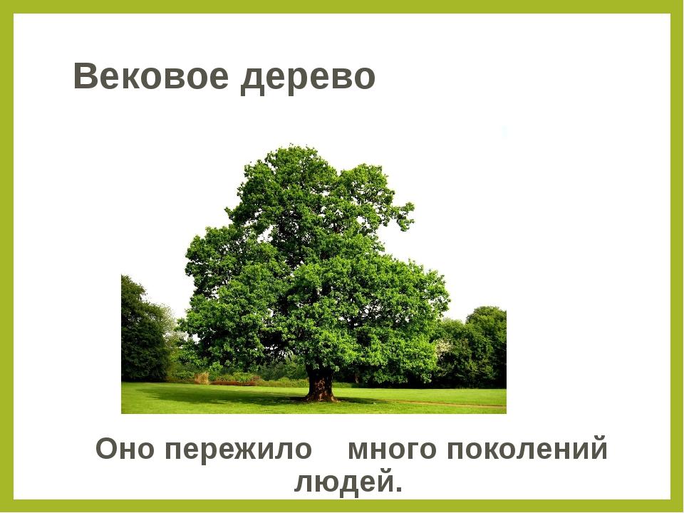 Вековое дерево Оно пережило много поколений людей.
