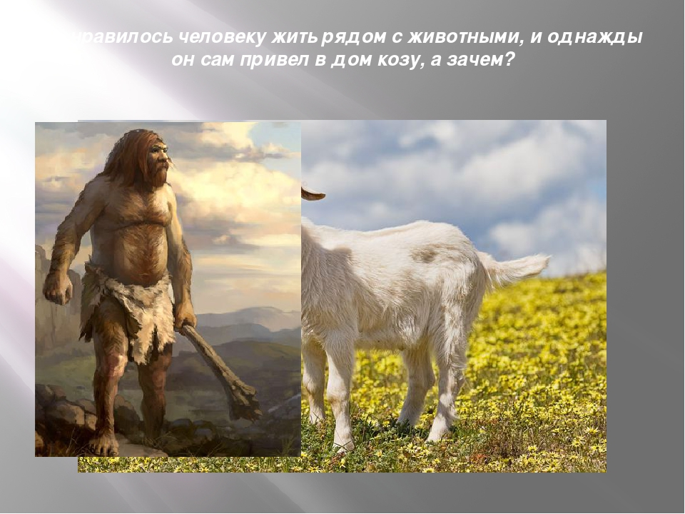 Понравилось человеку жить рядом с животными, и однажды он сам привел в дом ко...