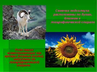 Рога таких млекопитающих как архары (горные козлы), закручены по логарифмичес