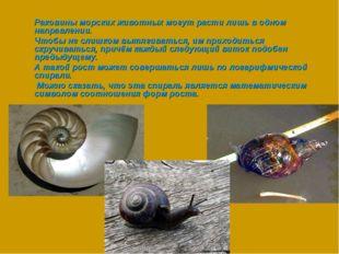 Раковины морских животных могут расти лишь в одном направлении. Чтобы не слиш