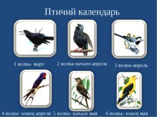 Птичий календарь 1 волна- март 5 волна- начало мая 4 волна- конец апреля 3 в