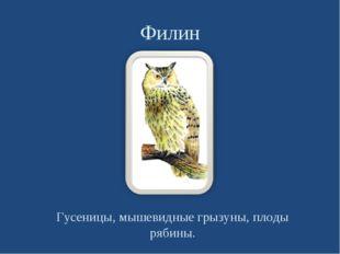 Филин Гусеницы, мышевидные грызуны, плоды рябины.