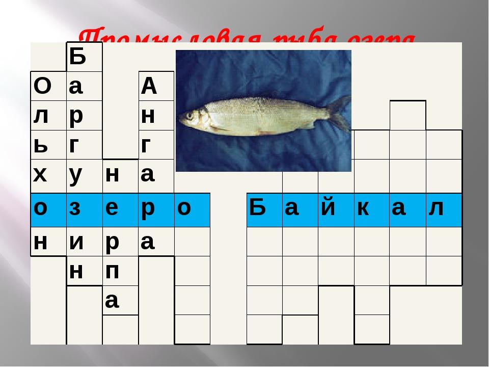 Промысловая рыба озера Байкал? Б О а А л р н ь г г х у н а о з е р о Б а й к...