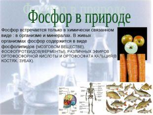 Фосфор в природе Фосфор встречается только в химически связанном виде : в орг