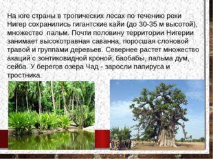 На юге страны в тропических лесах по течению реки Нигер сохранились гигантски
