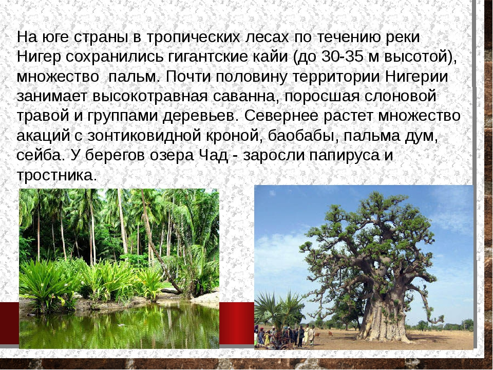 На юге страны в тропических лесах по течению реки Нигер сохранились гигантски...