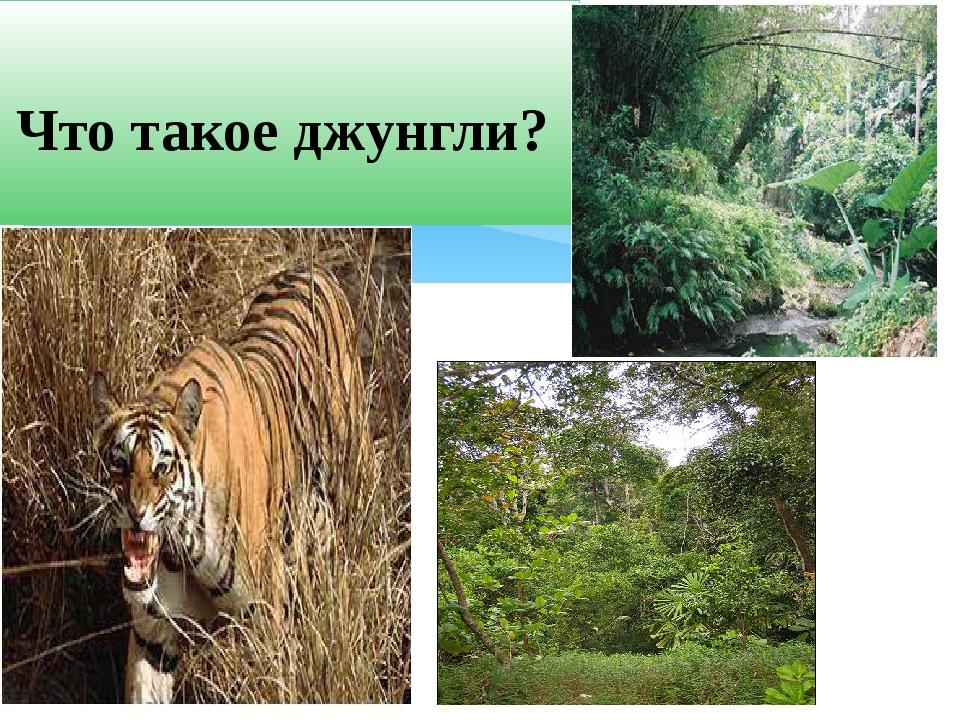 Что такое джунгли?