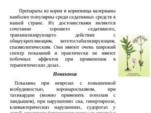 Препараты из корня и корневища валерианы наиболее популярны среди седативных