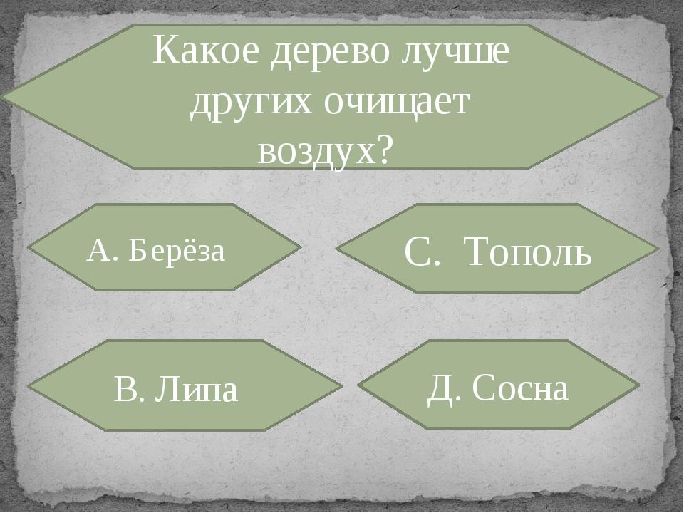 Какое дерево лучше других очищает воздух? А. Берёза С. Тополь В. Липа Д. Сосна