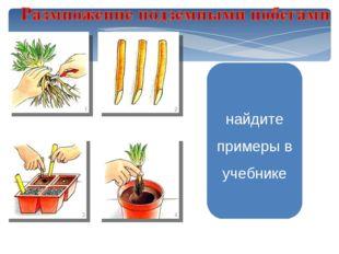 найдите примеры в учебнике Размножение корневыми Нарезать кусочками черенками