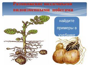 Картофель Топинамбур найдите примеры в учебнике