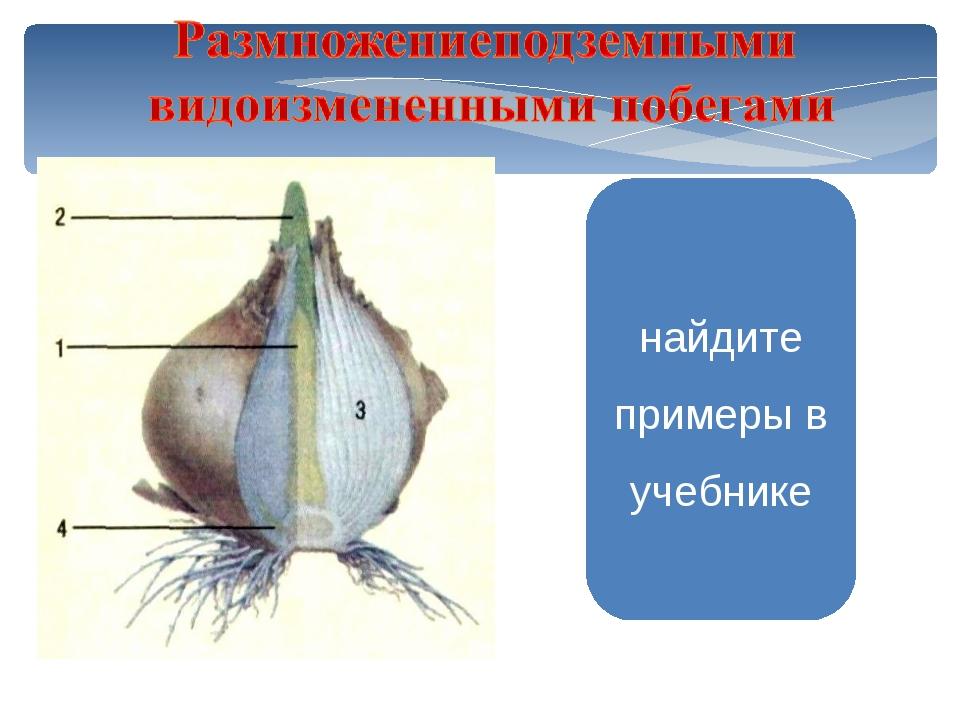 Нарцисс Подснежник найдите примеры в учебнике