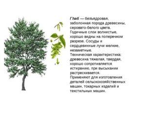 Гhаб — безъядровая, заболонная порода древесины, серовато-белого цвета. Годич