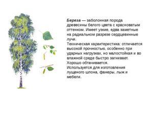 Береза — заболонная порода древесины белого цвета с красноватым оттенком. Име