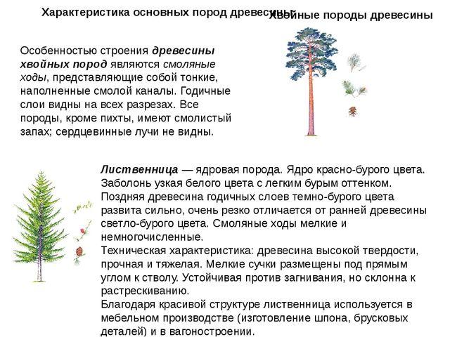 Характеристика основных пород древесины Особенностью строения древесины хвойн...