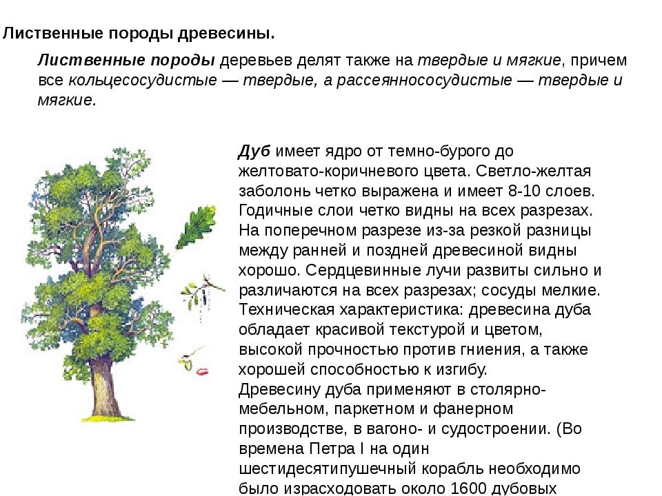 Лиственные породы древесины. Лиственные породы деревьев делят также на тверды...