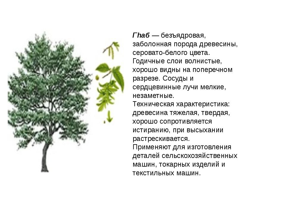 Гhаб — безъядровая, заболонная порода древесины, серовато-белого цвета. Годич...