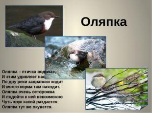 Оляпка Оляпка – птичка водолаз, И этим удивляет нас, По дну реки заправски х