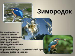 Зимородок Над рекой на ветке Лазурный огонек Это птичка зимородок Добычу сте