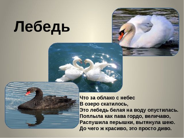Лебедь Что за облако с небес В озеро скатилось, Это лебедь белая на воду опу...