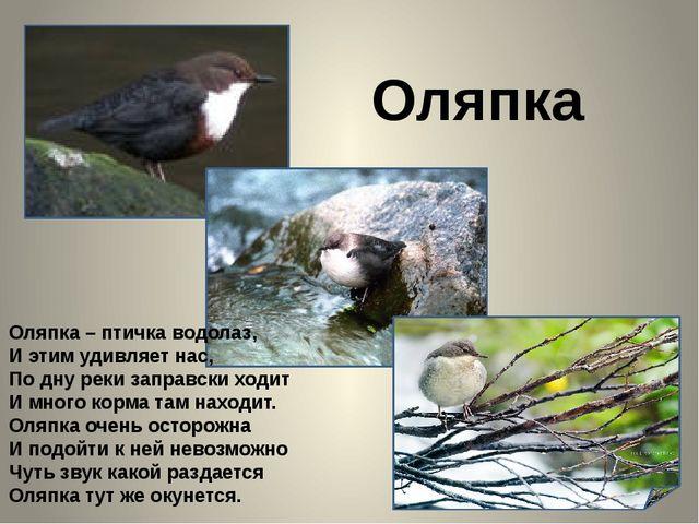 Оляпка Оляпка – птичка водолаз, И этим удивляет нас, По дну реки заправски х...