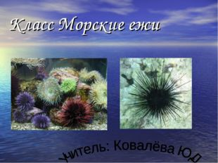 Класс Морские ежи
