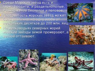 Среди Морских звёзд есть и гермафродиты, и раздельнополые. Размножение беспол