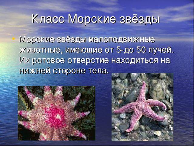 Класс Морские звёзды Морские звёзды малоподвижные животные, имеющие от 5-до 5...