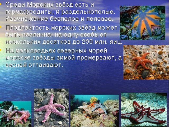 Среди Морских звёзд есть и гермафродиты, и раздельнополые. Размножение беспол...