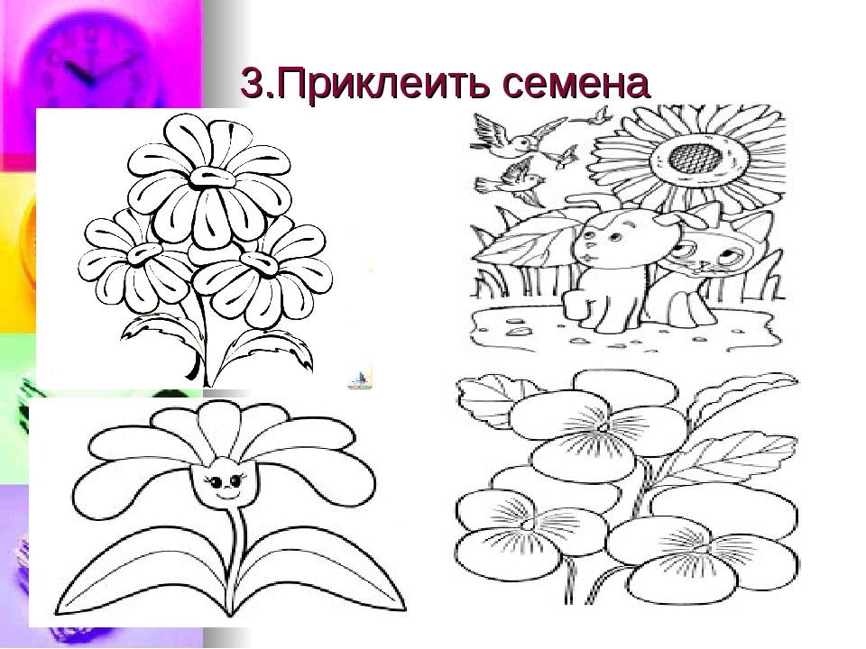 3.Приклеить семена