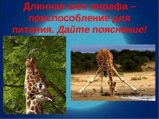 Длинная шея жирафа – приспособление для питания. Дайте пояснение!