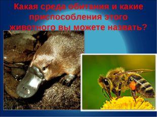 Какая среда обитания и какие приспособления этого животного вы можете назвать?