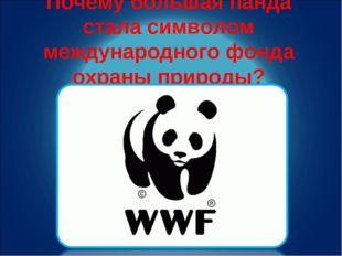 Почему большая панда стала символом международного фонда охраны природы?