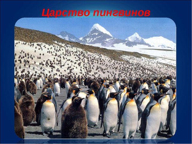 Царство пингвинов
