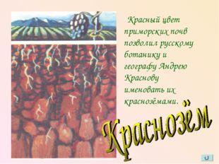 Красный цвет приморских почв позволил русскому ботанику и географу Андрею Кр