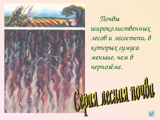 Почвы широколиственных лесов и лесостепи, в которых гумуса меньше, чем в чер...