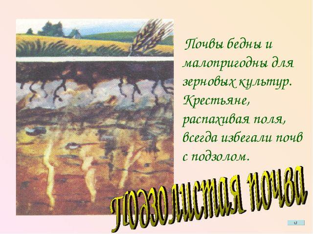 Почвы бедны и малопригодны для зерновых культур. Крестьяне, распахивая поля,...