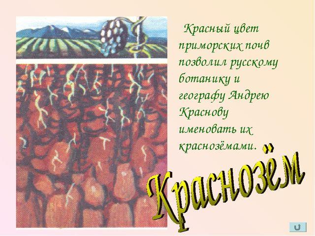 Красный цвет приморских почв позволил русскому ботанику и географу Андрею Кр...