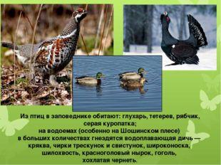 Из птиц в заповеднике обитают: глухарь, тетерев, рябчик, серая куропатка; на