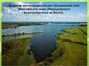 В состав заповедника входит Шошинский плес Московского моря (Иваньковского во