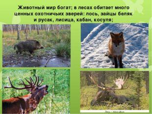 Животный мир богат; в лесах обитает много ценных охотничьих зверей: лось, зай